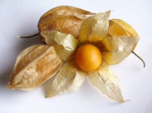 golden berry, caper berries, goji berry, dried gooseberry, where to buy golden berries, what are golden berries, what are golden berries good for, golden berries side effects, golden berries nutrition,
