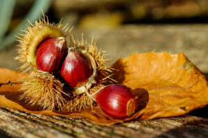 chestnut,storing chestnuts, chestnut butter, nuts constipation, what are chestnuts good for, what is a chestnut, how to cook chestnuts, sweet chestnut, sweet chestnut, the health nut, spiced nuts lovenuts, how to prepare chestnuts, toasted chestnuts, dried chestnuts, healthiest nuts, cooking chestnuts, chestnut plant, raw chestnuts, whole chestnuts, storing chestnuts, chestnut butter, nuts constipation, what are chestnuts good for, what is a chestnut, how to cook chestnuts, sweet chestnut, sweet chestnut, the health nut, spiced nuts lovenuts, how to prepare chestnuts, toasted chestnuts, dried chestnuts, healthiest nuts, cooking chestnuts, chestnut plant, raw chestnuts, whole chestnuts, chestnut health, are chestnuts good for diabetics, sliced water chestnuts, health benefits of chestnuts, flowers on chestnut, chestnut flower, water chestnuts nutrition, what is a chestnut, chestnut benefits, horse chestnut tree facts, sweet chestnut,