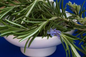 rosemary,nature,health,herbs,protein,nutrition facts,herb garden