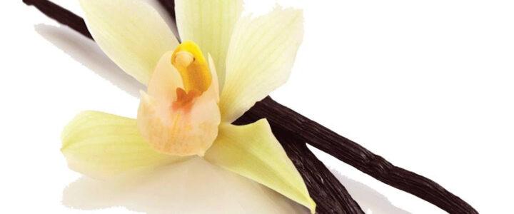 Organic Vanilla Bean – Heaven Scent